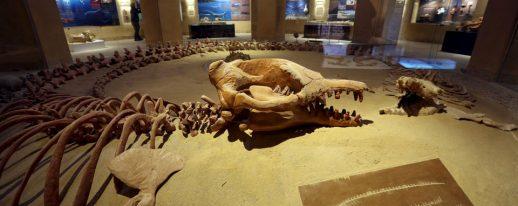 Egypt Fayoum Whales valley tour