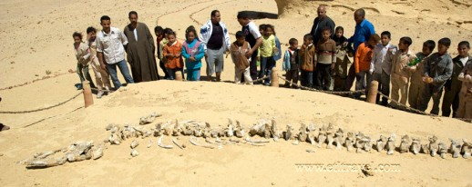 Egypt western desert fayoum whales valley