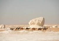 White Desert Farafra Oasis Bahariya Tour